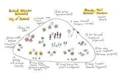 Pollinator garden field map.