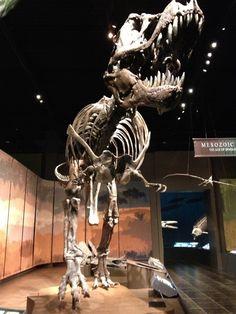 See dinosaurs at Tellus Museum in Cartersville, Georgia!