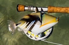 ALPHONSE ISLAND RESORT | Yellow Dog Fly Fishing