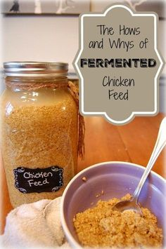 The hows and whys of fermented chicken feed