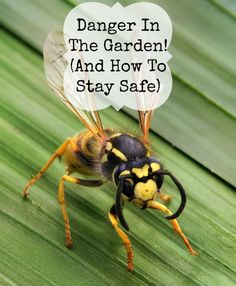 Dangers In The Garden And How To Stay Safe.  Recommendations from a professional gardener on some common garden dangers.