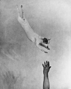 Martin Munkacsi - Jumping Fox Terrier, ca. 1930.