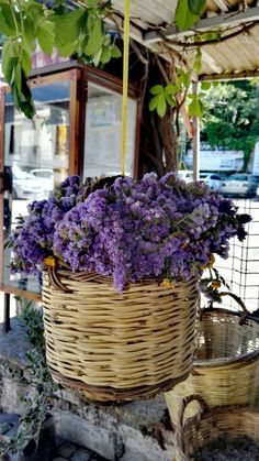 Ayvalık/Gülin Wicker Baskets, Plants, Home Decor, Flora, Interior Design, Home Interior Design, Plant, Home Decoration, Decoration Home