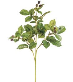 27'' Raspberry Bush Stem: floral: crafts: Shop | Joann.com