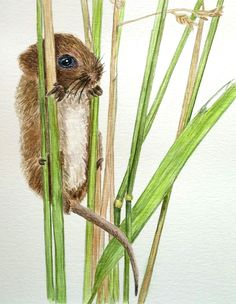 Harvest Mouse.  He is so cute!    Tutorial  from Anna Mason Watercolor School