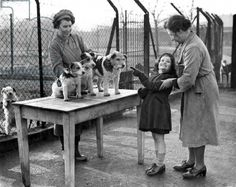 A young girl chooses a new pet from three dogs who lost their owners during the Blitz, January 1941 (b/w photo)