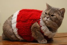 Image result for vests for cats