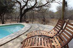 #private pool # bush# leeusvilla#krugerholidayhouse# private selfcatering lodge# southafrica# huis huren bij kruger