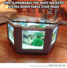 cool-living-room-fish-tank-table : Someday, I want something like this!