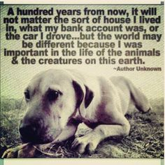 I was important in the life of the animals and the creatures on this earth.