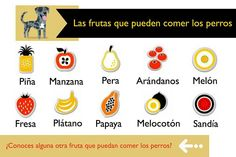 """Frutas que pueden comer los perros. Sin excesos, grandes sustitutivos de """"los premios"""" comerciales. ;-)"""