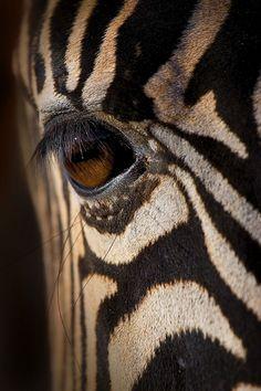 A Zebra's eye up-close by Adam McGrath