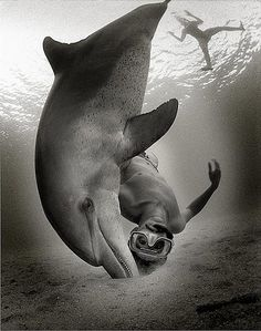A collection of underwater mermaids, dolphins, horses and other creatures that drift through this compelling portfolio of underwater photography. Cool Stuff, Underwater Photographer, Underwater Life, Underwater Photoshoot, Jolie Photo, Fauna, Pics Art, Ocean Life, Marine Life