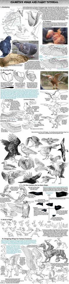 Comment dessiner des AILES de Ciameth (http://ciameth.deviantart.com/art/Ciameth-s-Wing-Tutorial-259586003?q=favby:nanacasas/46002795&qo=378)