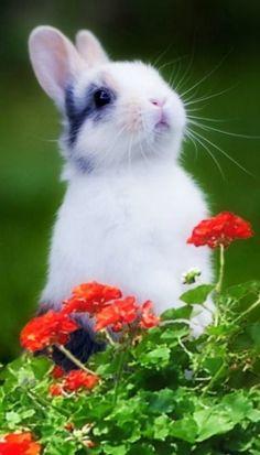 Divine rabbit