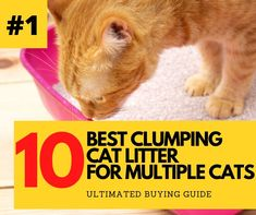Tidy Cat Litter, Tidy Cats, Best Litter Box, Tree Furniture, Cat Urine, Back Off, Cat Paws, Cat Food