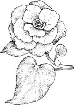 camellia - graciousness