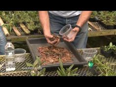 Como Fazer Substrato em Casa Para Orquideas / Dicas especiais - YouTube