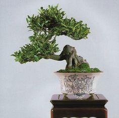 "bonsaipots.net - The ""Who is who"" of a Pot"