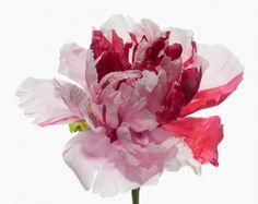 Big Blooms - Paul La