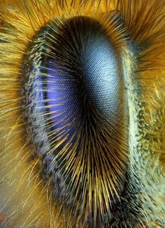 La Familia de la Apicultura - The Beekeeping of Family: Ojo de abeja obrera - Eye of worker bee - Abeille . Photo Oeil, Macro And Micro, Fotografia Macro, Bugs And Insects, Weird Insects, Tier Fotos, Save The Bees, Mundo Animal, Bees Knees