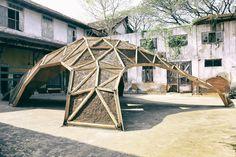 從菌落庭院中找尋建築生命的延續