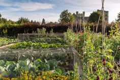 The Kitchen Garden at Helmsley Walled Gardens - from Victorian Gardens on http://www.aboutbritain.com/articles/victorian-gardens.asp Looks like a great range of produce growing there - wouldn't it be great to have a vegetable garden like this? (And a gardner to look after it).