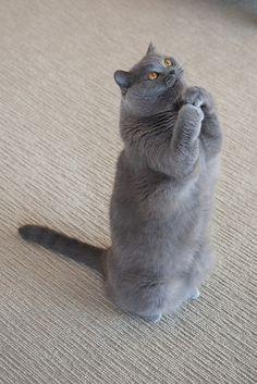 ich bin sehr standfest, miau ^^