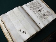 Medieval manuscript… with a paw-print from a cat, in the original text… some monk let the cat walk all over his wet ink! I Love Cats, Cute Cats, Funny Cats, Funny Animals, Cats Humor, Cat Jokes, Animal Funnies, Pet Memes, Adorable Animals