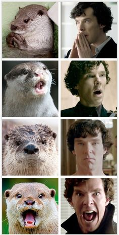 Otters that look like Benedict Cumberpatch