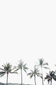 palms on palms on palms.