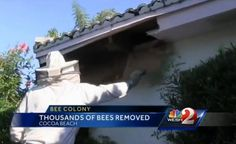 20,000 bees removed from 98-year-old Florida woman's home