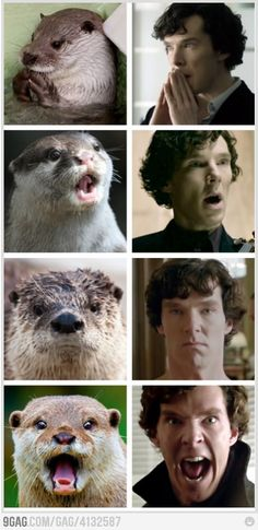 LOL!! Otters Who Look Like Benedict Cumberbatch