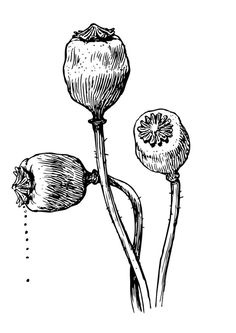 Coloring page seeds from culvert