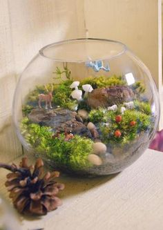 The charm of the terrarium is that it is possible to make a story depending on the production of accessories. Deer and mushrooms, such as fairy tale accessories are finished cute. Fairy Terrarium, Moss Terrarium, Terrarium Ideas, Green Flowers, Wild Flowers, Moss Plant, Mini Bonsai, Kawaii Room, Bonsai Art