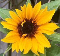 My 💐 Plants, Photography, Photograph, Fotografie, Photo Shoot, Planters, Fotografia, Plant, Planting