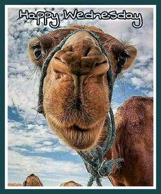 Happy Animal Picture : happy, animal, picture, Happy, Wednesday, Ideas, Animals,