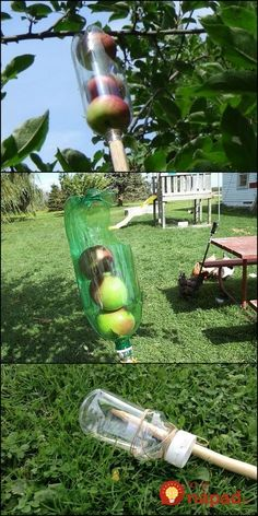 Can't reach the fruits hanging from the higher branches of your trees? Don't let them go to waste, use a fruit picker! Now why buy one when you can one out of a soda bottle? This little DIY project costs nothing since all the materials are recycled. Fruit Garden, Water Garden, Vegetable Garden, Garden Seeds, Permaculture, Uses For Plastic Bottles, Garden Projects, Garden Tools, Diy Projects