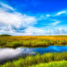 Places I would love to visit: Everglades National Park, Florida, United States