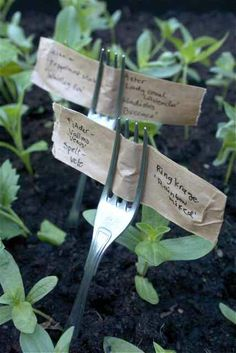 Innovate and reuse things for your garden. garden-thrift-and-reuse