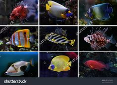 Collage Of Underwater Images. Collection Of Tropical Fishes Стоковые фотографии…