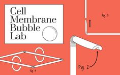 Cell Membrane Bubble Lab Revisited