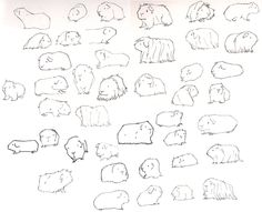 daisyhillyardillustration: I have lots of guinea pigs to draw. I鈥檓 learning all about them as I go along. Kinda loving it!聽 Talented guinea pig artist! Pig Sketch, Guinnea Pig, Pig Drawing, Drawing Ideas, Cute Guinea Pigs, Pig Art, Hamster, Pet Rabbit, Easy Drawings