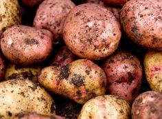 Cea mai simplă și ecologică schemă de tratamente chimice pentru toți pomii din livadă   Paradis Verde Paradis, Home And Garden, Potatoes, Gardening, Vegetables, Green, Plant, Potato, Lawn And Garden