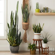 Grow these no-fuss houseplants to bring life to your home.