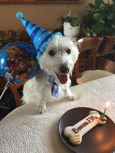 Sherlock 1st birthday
