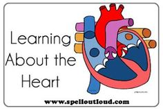 Heart Activities and printables  from @SpellOutloud