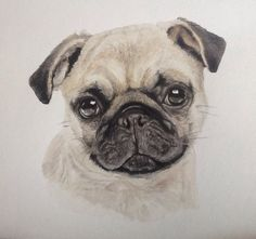 Pug dog in watercolour by judy dickinson
