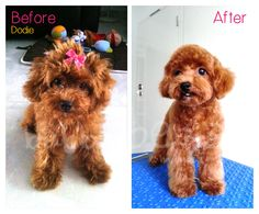 Dodie first grooming!