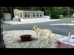 Camping with Pants - YouTube